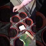 children  gardening activities video