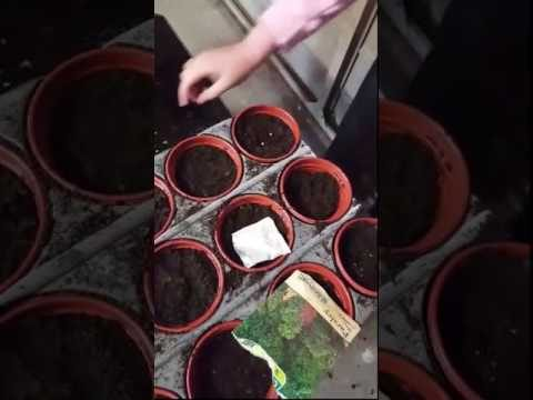 children  gardening activities video