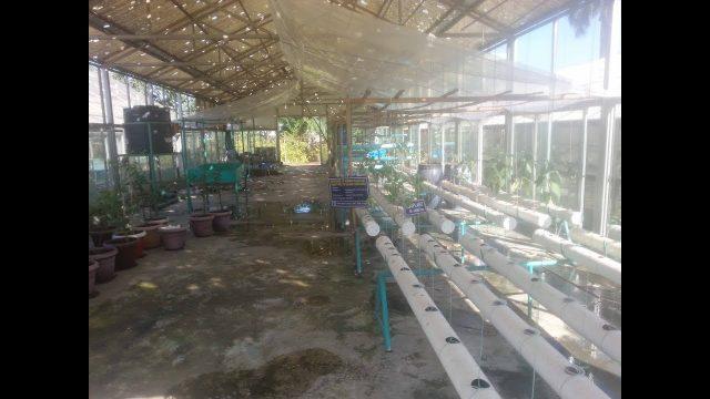 Hydroponic farming-2 || হাইড্রোপনিক পদ্ধতিতে চাষাবাদ… 02