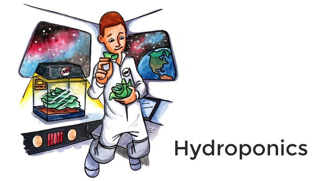 Hydroponics – A short introduction