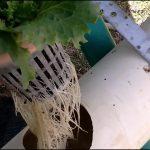 hydroponics vertical A Frame hydroponic system week  5