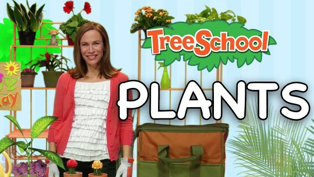 Plants | Treeschool | Episode 2 | Part 1| Educational Kids Video