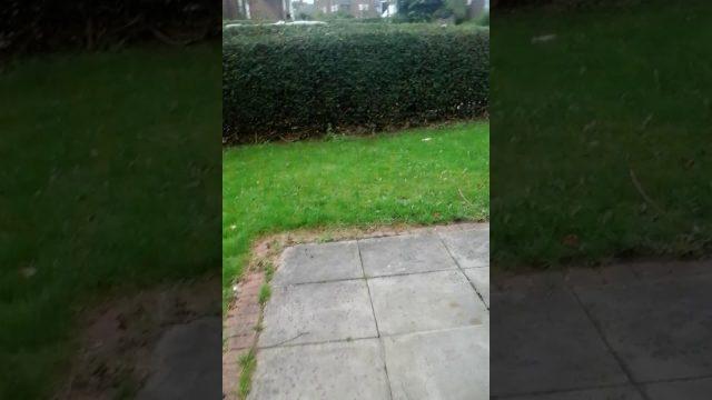Wierd kid in my mums garden