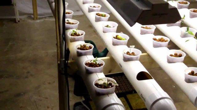 Basement hydroponics system 1