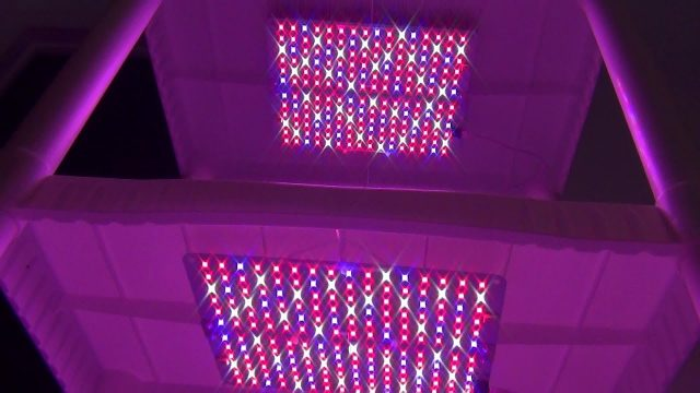 LED Grow Shelf – Year Round Indoor Gardening and Springtime Seed Starting