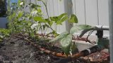 How to install a reliable drip system for your vegetable garden (菜园自动滴灌系统)