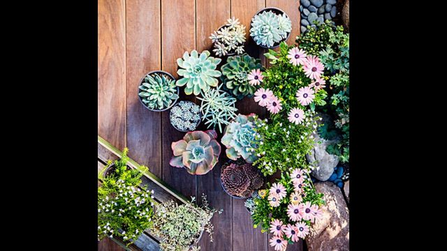 Amazing Garden Ideas With Succulents