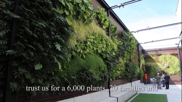 Vertical gardens around the world – Alicante (part 2)