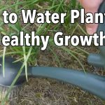 Watering Your Vegetable Garden: How to Water Plants for Healthier Growth