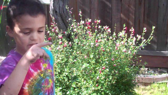 Healthy Vegan Kids In The Garden by Veggie Kids