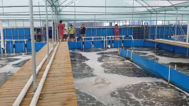 Vannamei 101   Super intensive indoor shrimp culture farms
