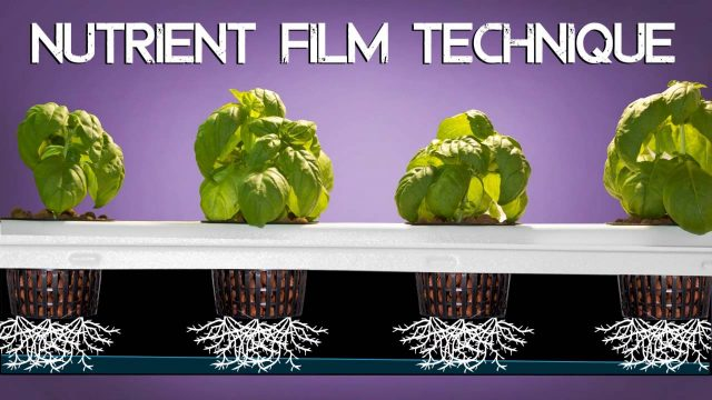 SuperPonics SuperFlow Hydroponic System By SuperCloset
