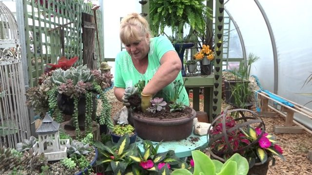 Quick & Easy Succulent Garden Just For You