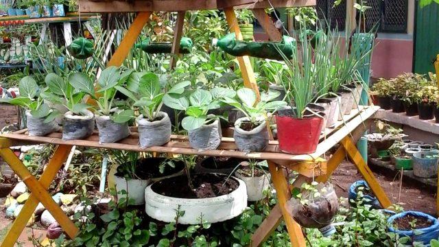 Vegetable Garden in School of Manuel Lugod Elementary School