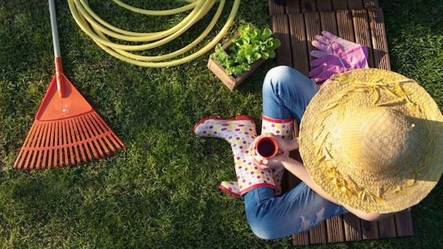Best Reasons To Start Gardening- Stress Relief, Exercise, Mental Health