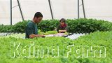 Kaima – Hydroponic Farm in Jerusalem