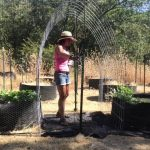 How To Build a Cheap Strong Trellis for About 40 Bucks For Squash, Watermelon / Melons