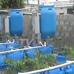Soil-Less Farming | Aquaponic Gardening – Growing Fish and Vegetables Together | Annapurna |TV5 News