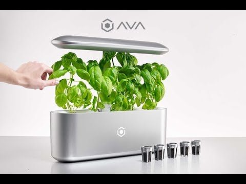AVA Byte: World's Best Automated Indoor Smart Garden. Get #AVAByte Now at AVAgrows.com