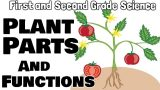 Plant Parts and Functions | First and Second Grade Science Lesson For Kids