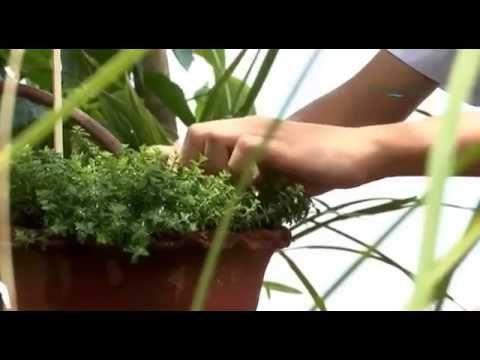 Herbal Gardens in Schools