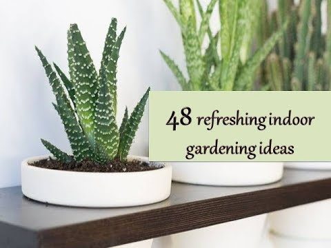 48 Beautiful and Refreshing Indoor Gardening Ideas