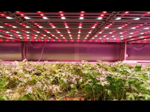 Could high-tech vertical farms help us feed the world in the 21st century?