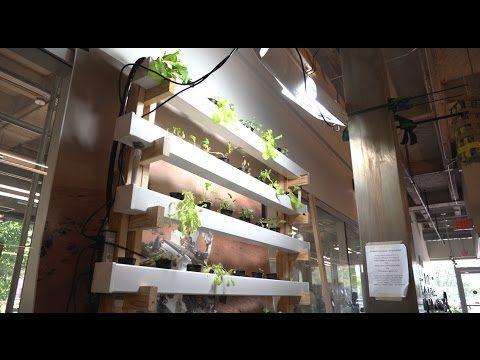 Rice U. team cultivates ideas for indoor farming
