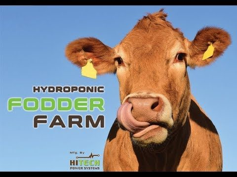 Hydroponic Fodder Farm for Dairy Animal – Grow Green Fodder