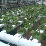 My School Garden Project