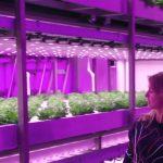 Met vertical farming een boerenkoolflat maken?   Loulou's Lab #1   Appie Today