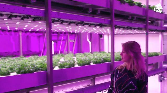 Met vertical farming een boerenkoolflat maken? | Loulou's Lab #1 | Appie Today