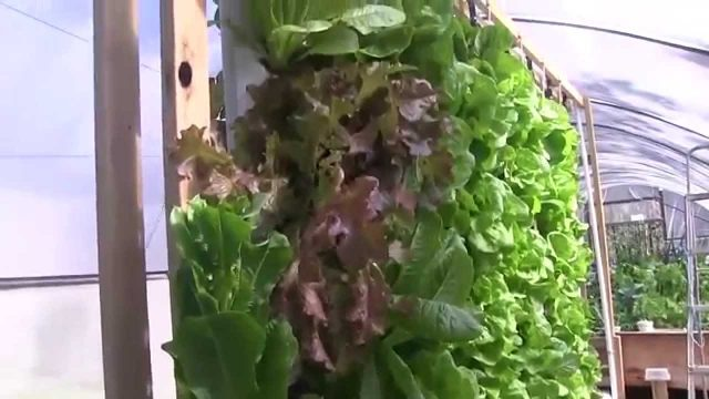 Go Pick Some Lettuce. Aquaponics Tower Pockets Plant- Harvest