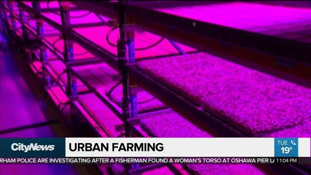 Urban vertical farming hits Toronto