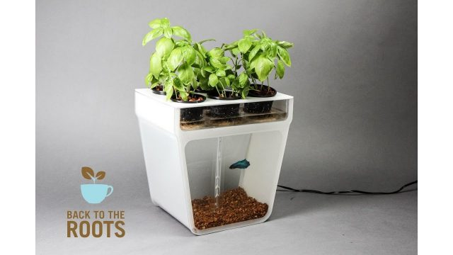 Best indoor Garden/Plants Invention – Innovation in plants