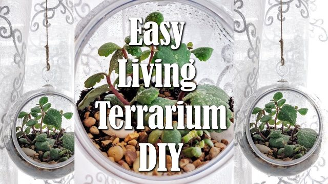 Dollar Tree Hanging Terrarium with Living Succulents DIY Easy Living Home Decor