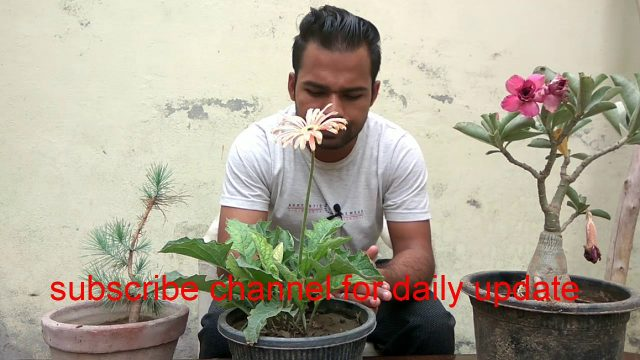 Basic gardening tips for biggners || Episode – 01