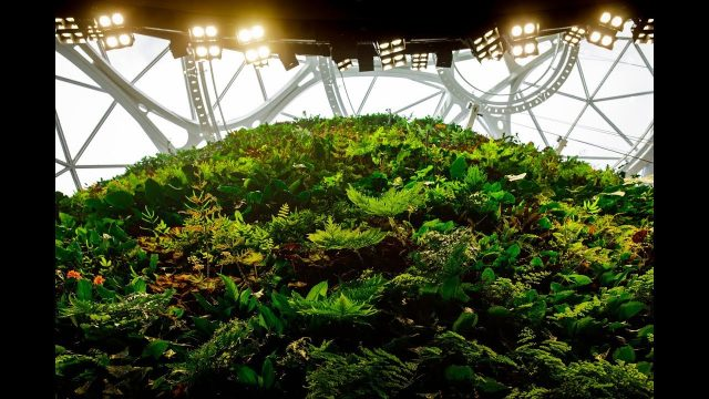 Amazon Spheres' Living Wall