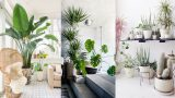 25+ Best Indoor Plants Ideas – Simple Ways to Decorate with Houseplants