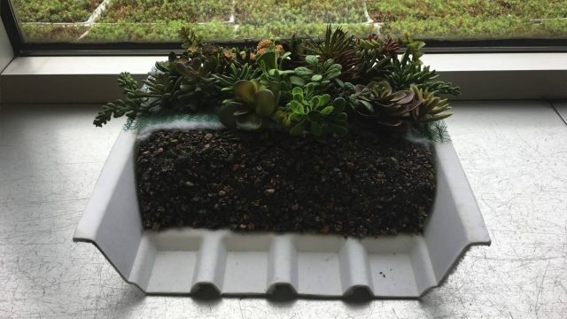 Cleveland Hopkins International Airport unveils environmentally friendly green roofs