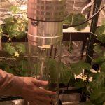 Hydroponic Grow Room   Big Buddha Hydroponic System by Supercloset
