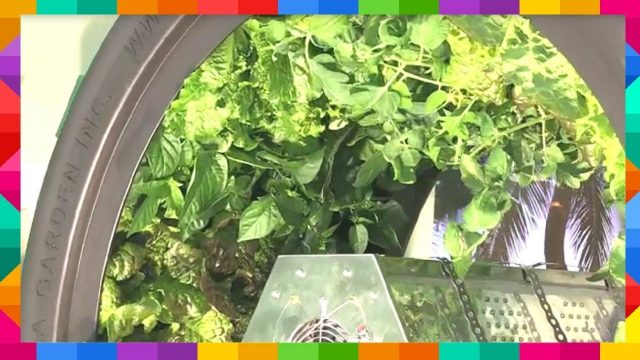Benefits of Hydroponics Growing Systems Vertical Farming Aeroponics Omega Garden Greenhouse Tent