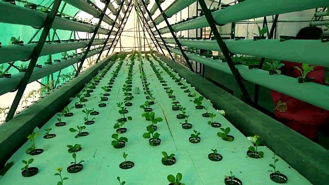 Hydrophonics in galyang. Future of agriculture