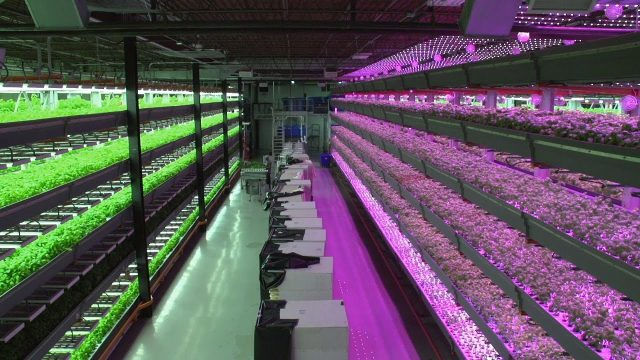 Indoor Farms Are the Future