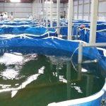 ঘরের ভেতর মাছ চাষ | Indoor Fish Farming RAS