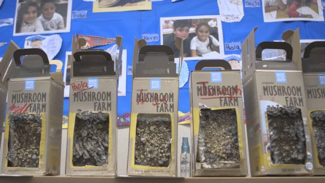 Back to the Roots Garden Toolkits Hit Classrooms Nationwide