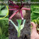 Fall Vegetable Garden Planning – Choosing the Best Plants for Autumn Growing