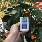 Hydroponics Self Sustaining – Hydroponic Tomato Dual System 1:3