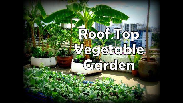 மாடித்தோட்டம் அமைக்கும் முறை – Rooftop Gardening