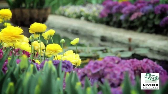 Landscape Garden Design Adelaide
